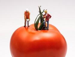 Semiotica del consumo. Conflitti sociali. Valori